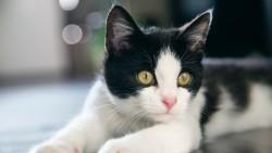 Wallpaper kitten