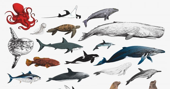 Drawing style of marine life collection