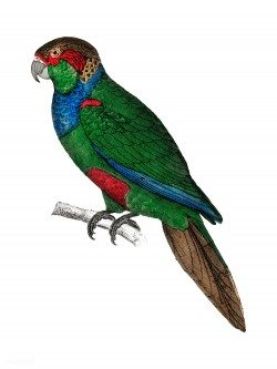 The History of the Earth and Animated Nature – Parrot
