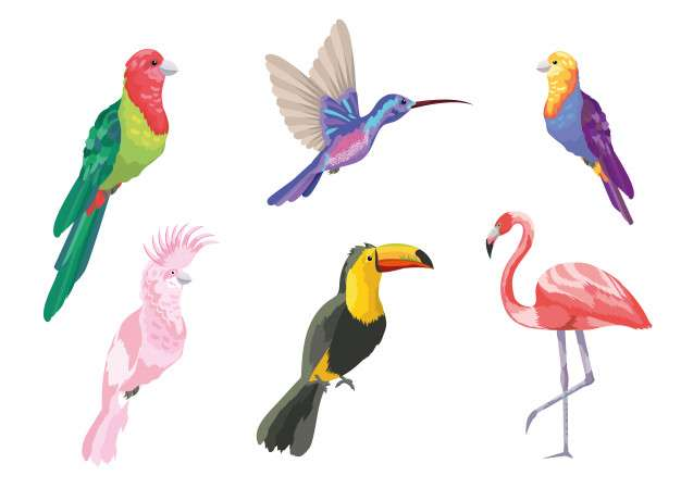 Set tropical birds exotic nature
