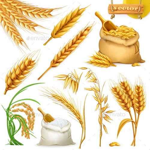 wheat illustration vector material 01