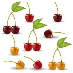 Fresh cherry realistic vector illustration 03