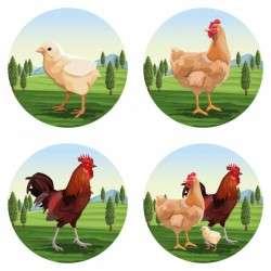 Chicken and roaster cartoons