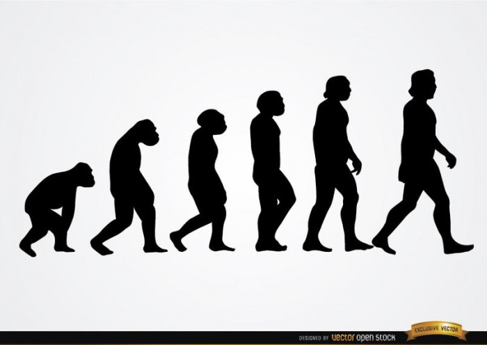 Human evolution silhouettes