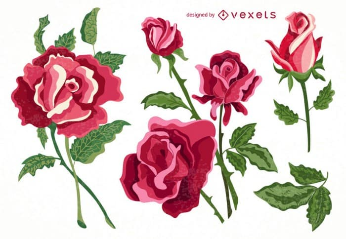 Set of isolated roses collection