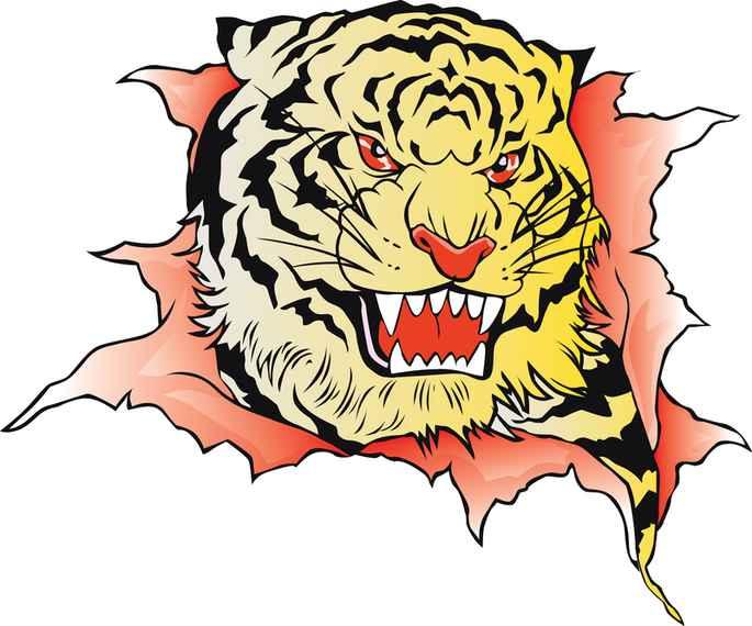 Tiger Image 38 Vector