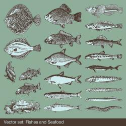 Big Fish Vector