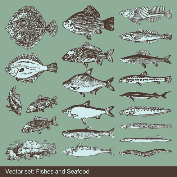 Big Fish Vector