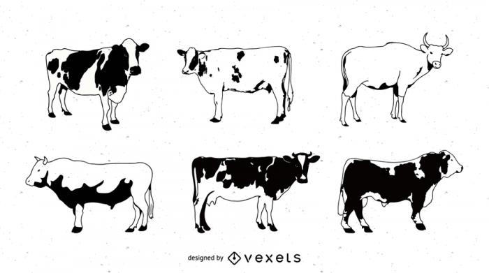 Black And White Picture Series Of A Painted Cow Vector
