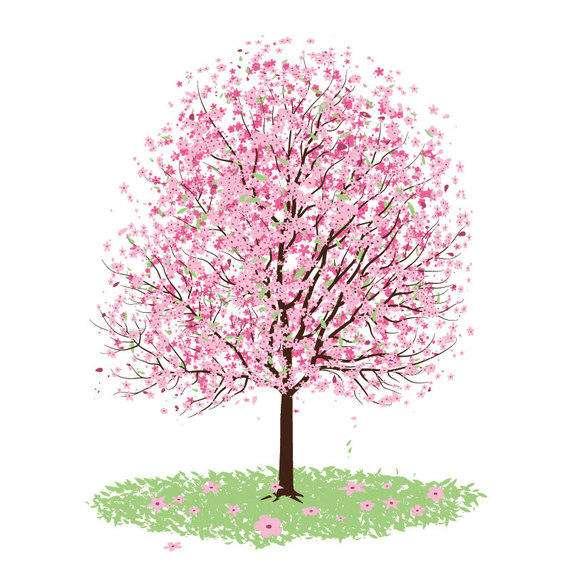 Cherry tree illlustration over white