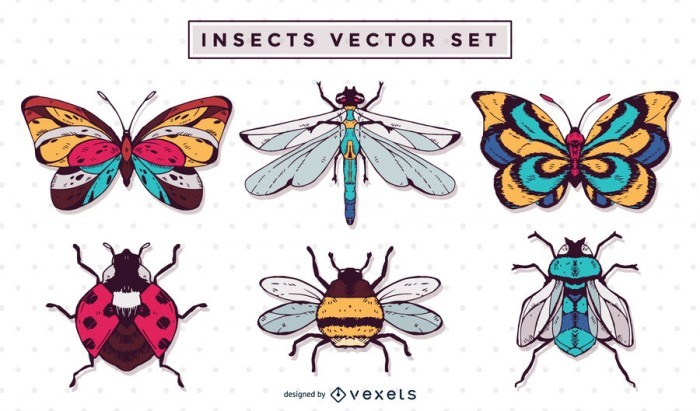 Hand drawn insect illustration set