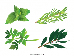 Herbal Leaves 05 Vector
