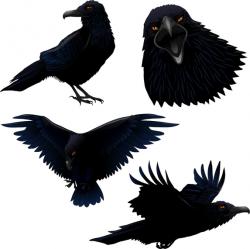 Illustrated crow set