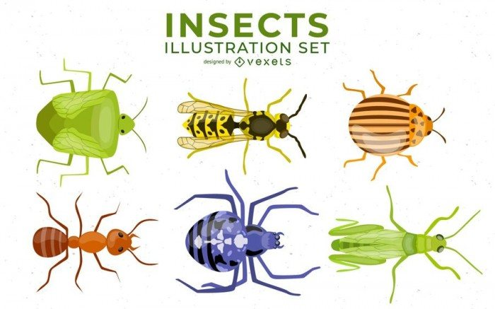 Insects Illustration Set