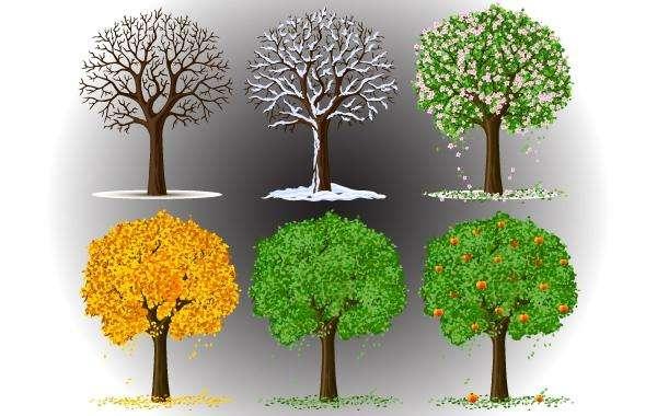 Tree in Seasons View