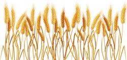 Yellow Wheat 02 Vector