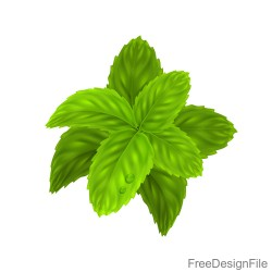 Peppermint green leaves illustration vector 03