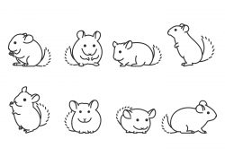 Chinchilla Line Icon