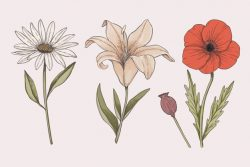 Colorful vintage botany flower collection draw