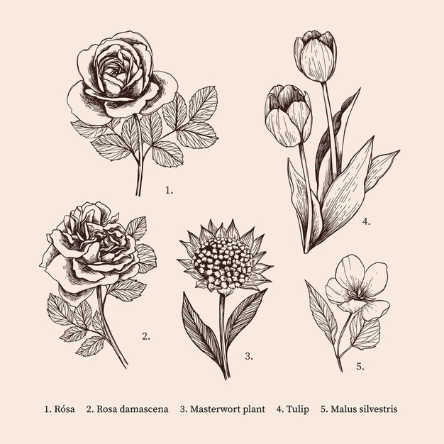 Hand-drawn vintage botany flower collection