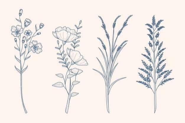 Herbs & wild flowers drawing in vintage style