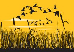 Reeds And Geese Silhouettes