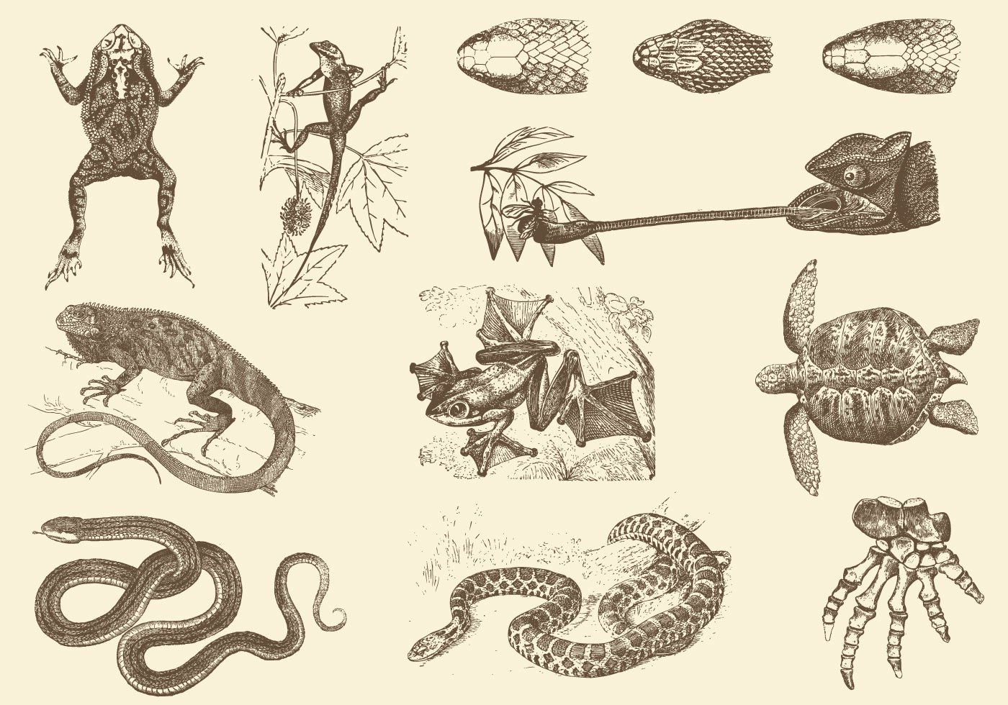 Sepia Reptile Illustrations