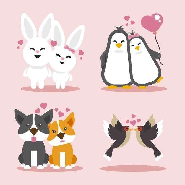 Valentine's day animal couple in flat design