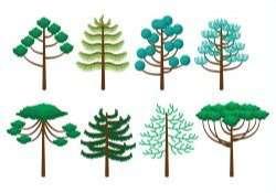 Araucaria Icons