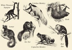 Old Style Drawing Mammals