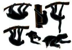 Sloth Animal Silhouette