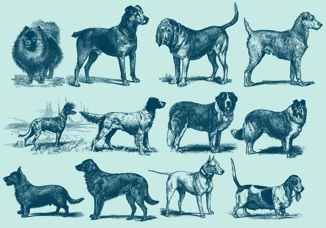 Vintage Blue Dog Illustration