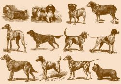 Vintage Brown Dog Illustrations