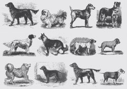 Vintage Gray Dog Illustrations
