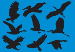 Wildfowl And Big Bird Silhouette Vectors