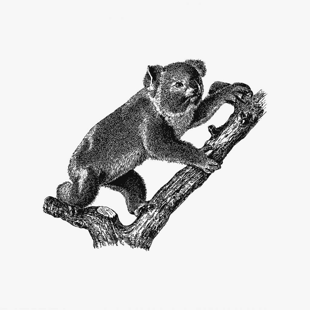 Koala shade drawing