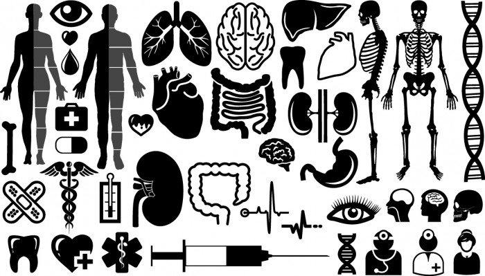 Organs symbols silhouette Vector