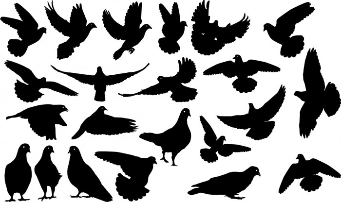 Pigeons silhouettes Vector