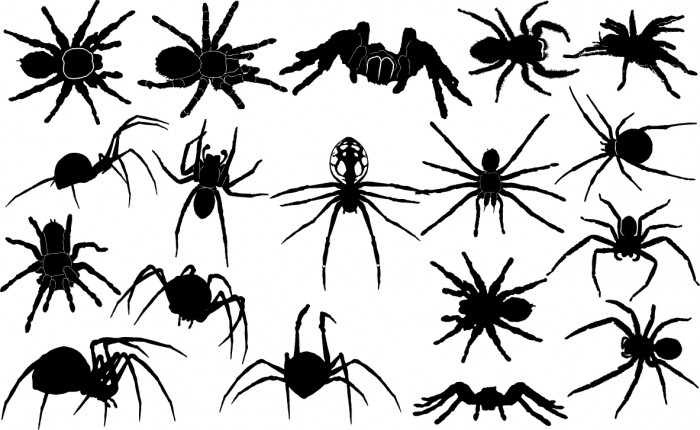 Spider silhouettes Vector