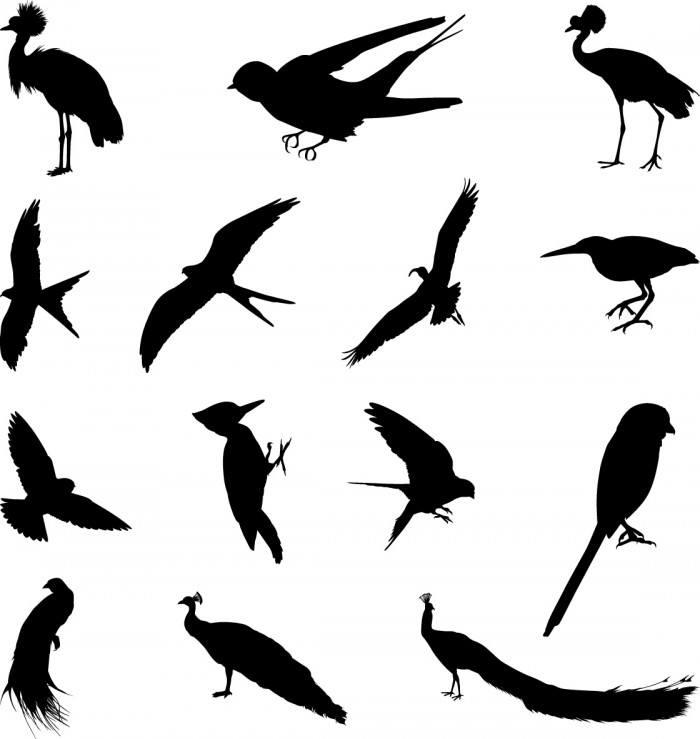 Various birds silhouettes set Vector