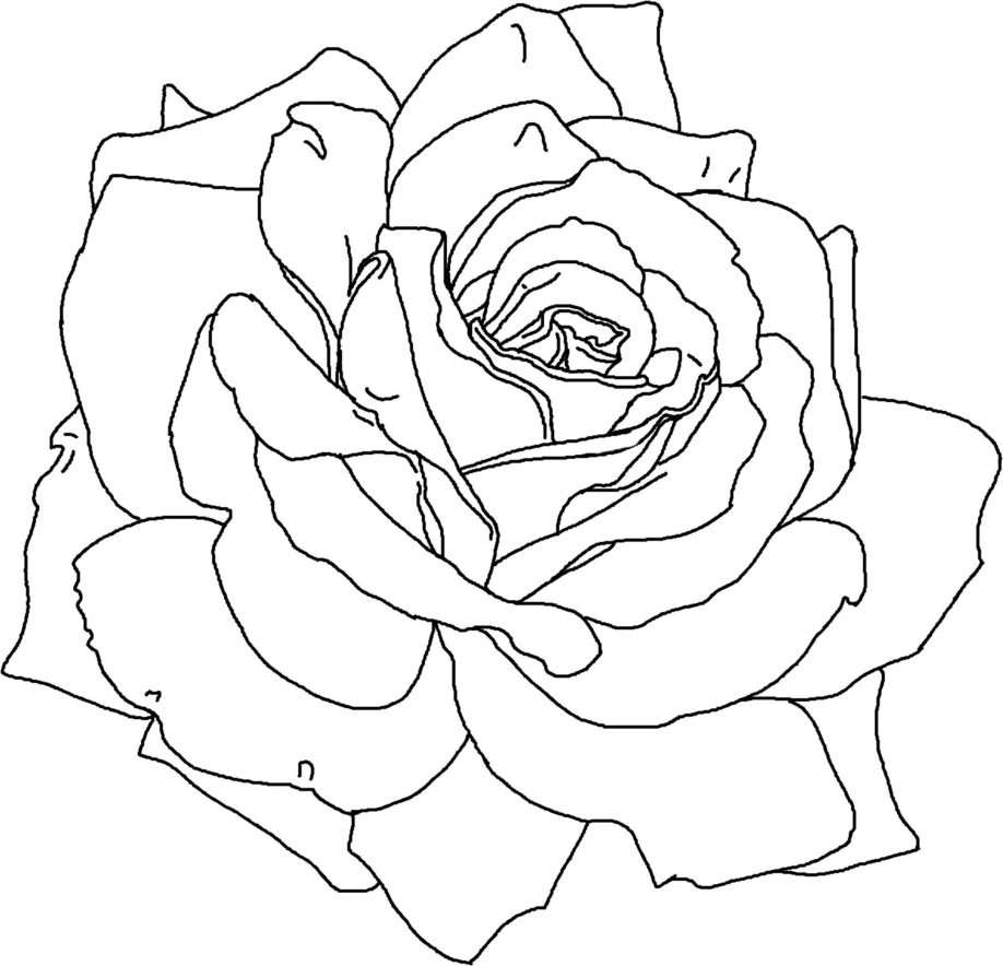 Free Coloring Pages Flowers Roses Free Vector Graphic Design Elements